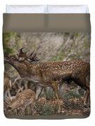 Mesopotamian Fallow Deer 3 Duvet Cover