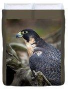 Peregrine Falcon Duvet Cover