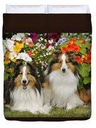 Shetland Sheepdogs Duvet Cover