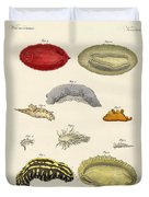 Strange Molluscs Duvet Cover