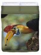 Sulawesi Red-knobbed Hornbill Male Duvet Cover