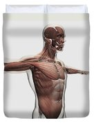 Anatomy Of Male Muscles In Upper Body Duvet Cover by Stocktrek Images