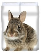 Baby Cottontail Bunny Rabbit Duvet Cover by Elena Elisseeva