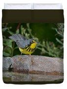 Canada Warbler Duvet Cover
