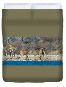 Giraffes Giraffa Camelopardalis Duvet Cover