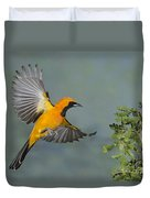Hooded Oriole Duvet Cover