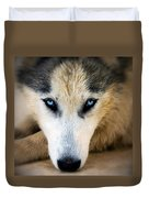 Husky  Duvet Cover by Stelios Kleanthous