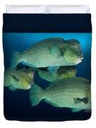 Large School Of Bumphead Parrotfish Duvet Cover