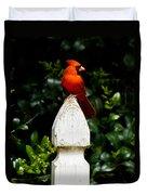 Male Cardinal Duvet Cover
