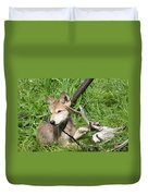 Gray Wolf Pup Duvet Cover