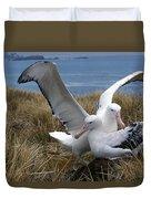 Albatros Royal Diomedea Epomophora Duvet Cover