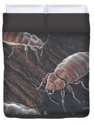 Bed Bugs Cimex Lectularius Duvet Cover