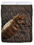 Bedbug Cimex Lectularius Duvet Cover
