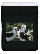 Black Browed Albatross Pair Duvet Cover