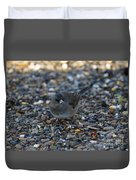 Dark Eyed Junco Duvet Cover