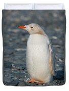 Gentoo Penguin Duvet Cover