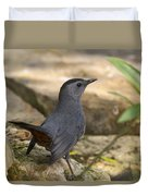 Gray Catbird Duvet Cover