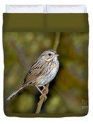 Lincolns Sparrow Duvet Cover