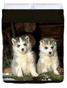 Siberian Husky Puppies Duvet Cover