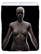 Urinary System Female Duvet Cover