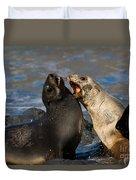 Antarctic Fur Seals Duvet Cover