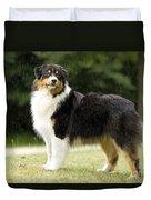 Australian Shepherd Dog Duvet Cover