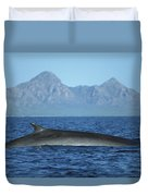 Fin Whale In Sea Of Cortez Duvet Cover