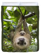 Hoffmanns Two-toed Sloth And Old Baby Duvet Cover