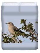 Northern Mockingbird  Duvet Cover