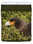 Striated Caracara Duvet Cover