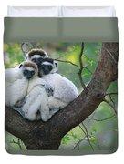 Verreauxs Sifakas Cuddling Duvet Cover