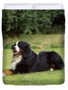 Bernese Mountain Dog Duvet Cover