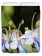 Clerodendrum Ugandense Or Blue Butterfly Bush Duvet Cover