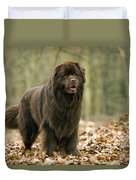 Newfoundland Dog Duvet Cover