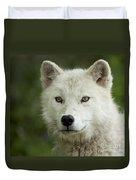 Arctic Wolf Pup Duvet Cover