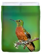 Chestnut-breasted Coronet Duvet Cover