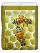 Honey Bees In Hive Duvet Cover
