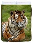Tigre De Sumatra Panthera Tigris Duvet Cover