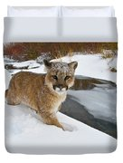 Mountain Lions In The Western Mountains Duvet Cover