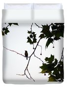 A Brown Thrasher Sings In Sycamore Tree Duvet Cover