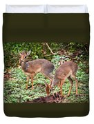 A Couple Of Dik-dik Antelopes In Tanzania. Africa Duvet Cover