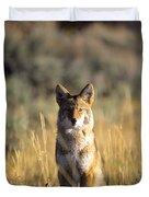 A Coyote Canis Latrans Stares Duvet Cover