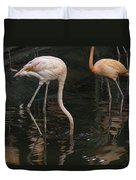 A Flamingo With Its Head Under Water In The Jurong Bird Park Duvet Cover