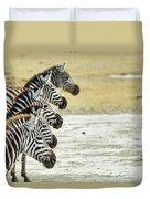 A Grevys Zebra In Ngorongoro Crater Duvet Cover
