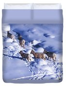 A Group Of Bighorn Sheep Ovis Duvet Cover