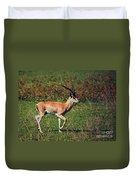 A Male Impala In Ngorongoro Crater. Tanzania Duvet Cover