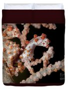 A Pair Of Pygmy Seahorse On Sea Fan Duvet Cover