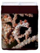 A Pair Of Pygmy Seahorse On Sea Fan Duvet Cover by Steve Jones