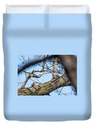 A Pair Of Red-bellied Woodpeckers Duvet Cover
