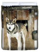 A Sled Dog Stands By Its Kennel Duvet Cover